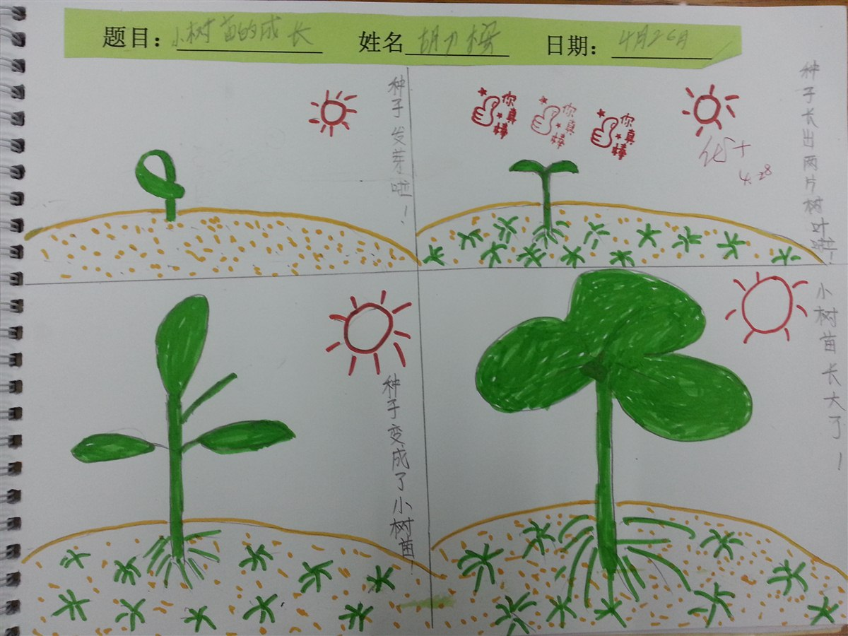 优秀绘本3:《小树苗的成长》