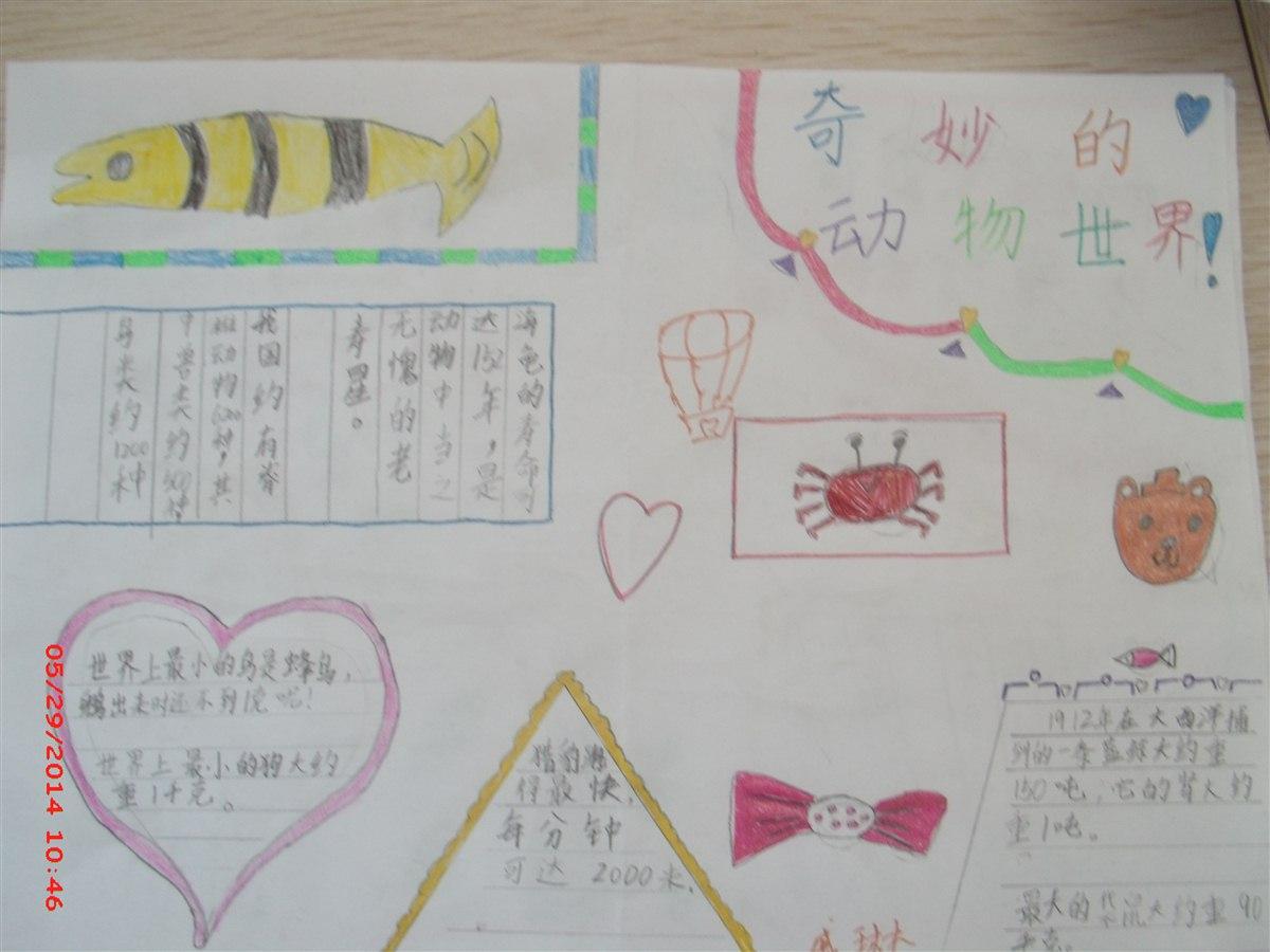 数学手抄报 奇妙的动物世界