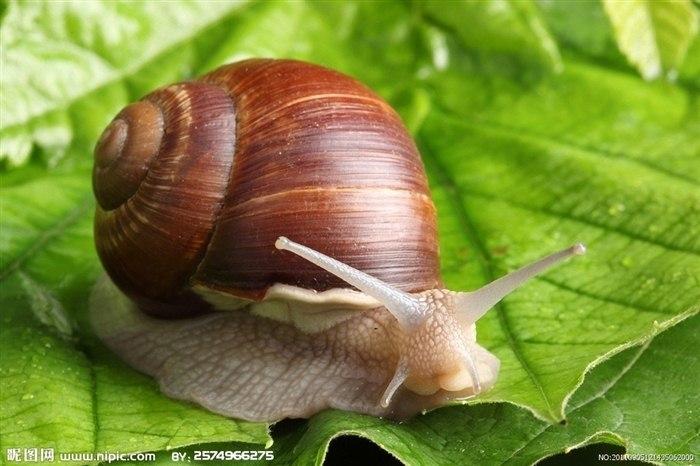 蜗牛图片大全可爱图片