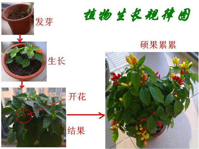 植物素描图片步骤