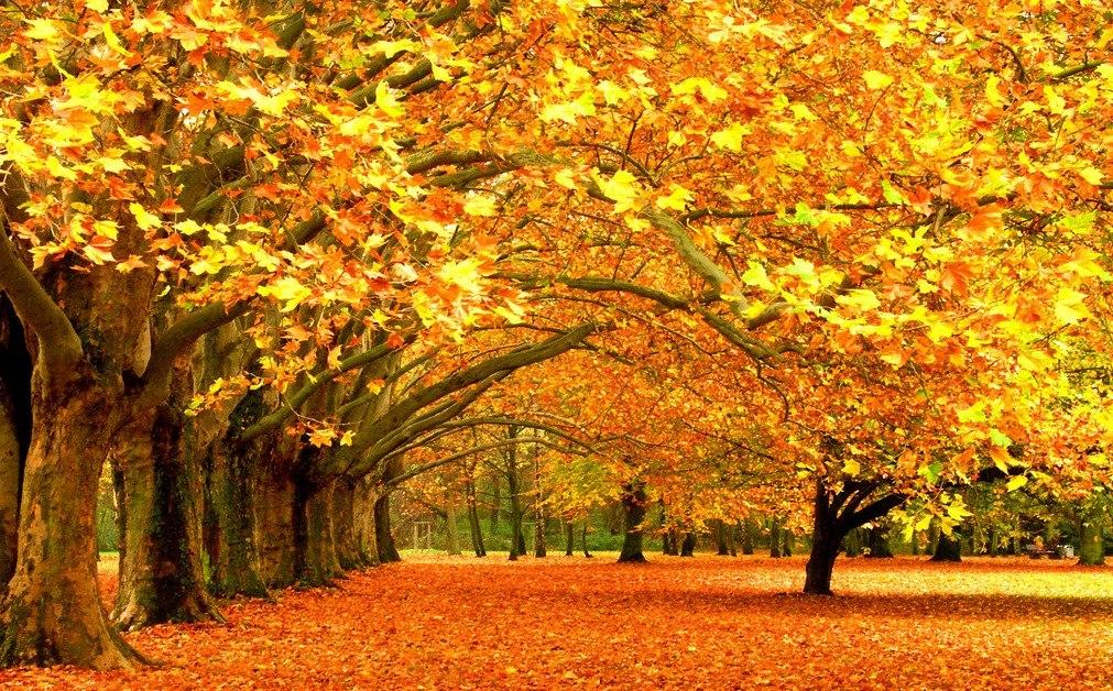 故事:秋天的图画 happy泗幼大五班-张家港市泗港幼儿园