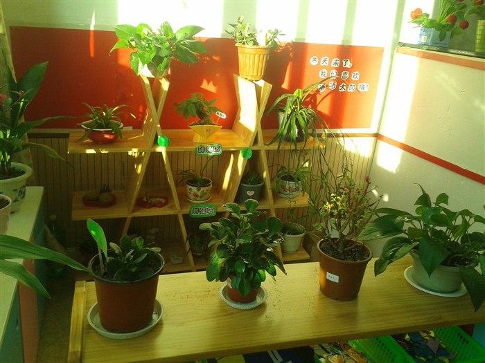 我们的室内自然角 中七班-张家港市南沙幼儿园