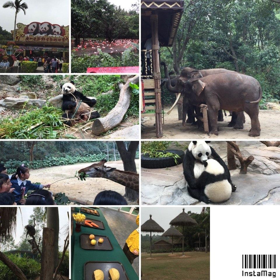 游长隆野生动物园 慈溪实验三小一年级10班-班级博客