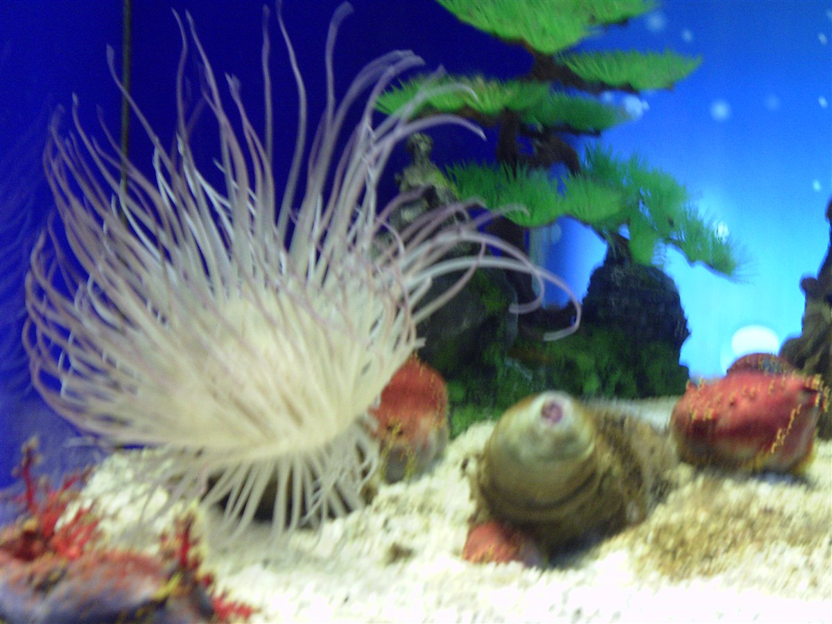 壁纸 海底 海底世界 海洋馆 水草 水生植物 水族馆 1200_900